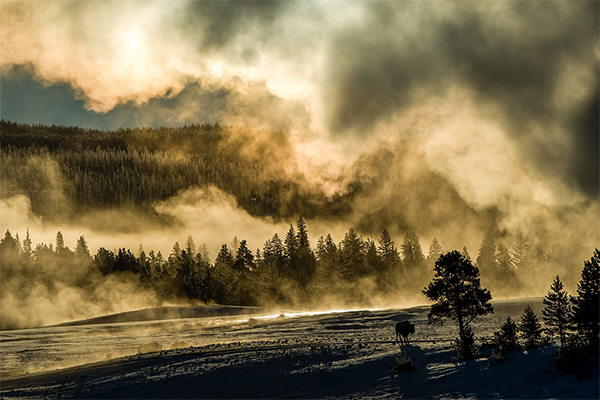 Steam from an Old Faithful eruption is more spectacular in winter because of the direct contact between the steam and the cold air. There is a silhouette of a bison cow absorbing the heat from the morning sun below the steam cloud.