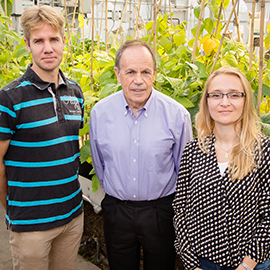 Stephen P. Long, a professor of crop sciences and of plant biology, center, with postdoctoral researchers Johannes Kromdijk, left, and Katarzyna Glowacka.