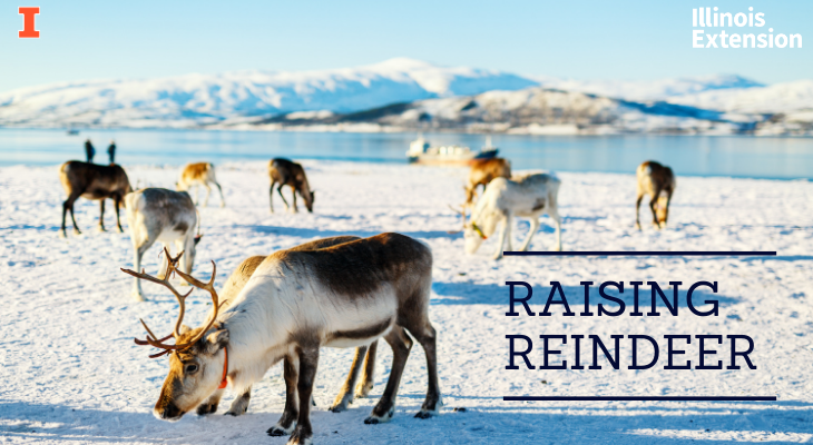 reindeer standing in the snow with mountains in the background