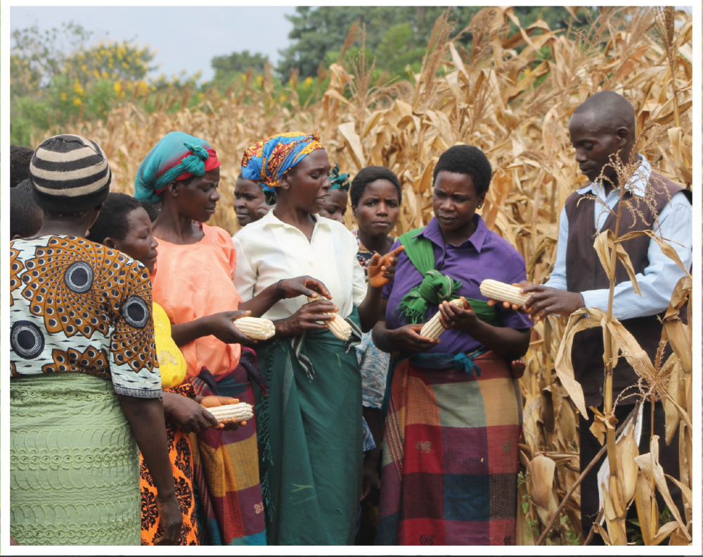 Extension training on maize production in Malawi.
