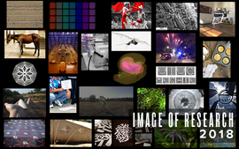 Image of Research semi-finalists in Instagram