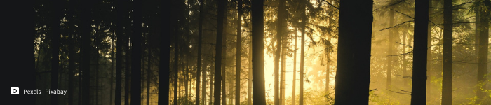 trees in a dark forest