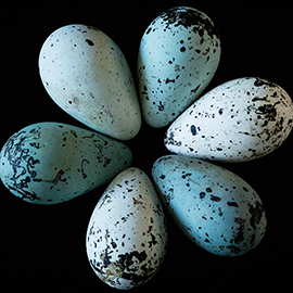 An image of 3-D printed pointy eggs