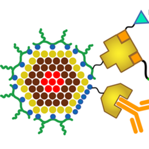 The structure of the quantum dot