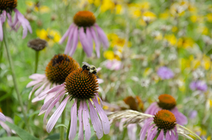 Bees are one of the most well-known pollinators, but many other insects and some birds and mammals are also pollinators.