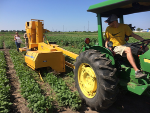 Machine harvest of edamame, lima bean, and snap bean plots in field trials near Urbana, IL.  The field trials examined an early-terminated cereal rye cover crop as a component of an integrated weed management system.  Photo by Marty Williams.
