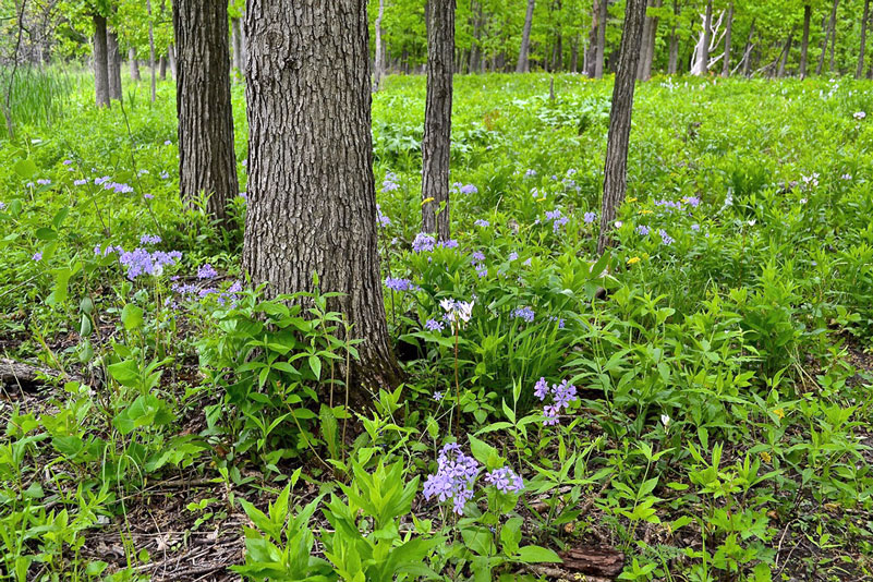 forest floor with wildflowers