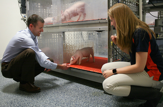 Ryan Dilger and Joanne Fil interact with piglet in artificial rearing environment