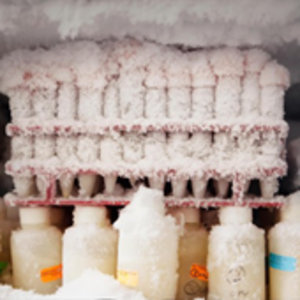 Iced packed laboratory tubes are shown in a freezer