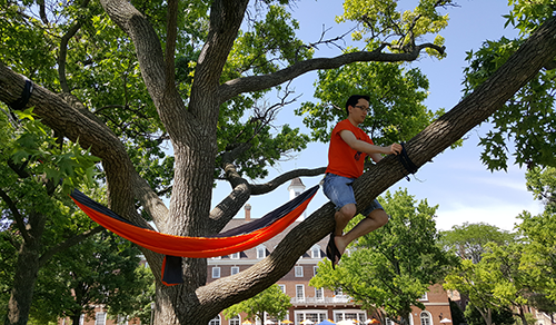 Alec Soer hanging a hammock in the trees on the Quad.