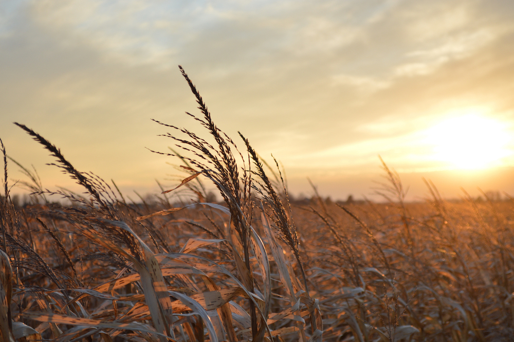 agricultural field experiencing drought